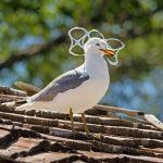 Plastica riciclata : premiato l'impegno della Procter & Gamble