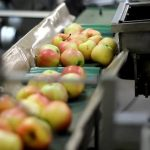 Certificazioni per il packaging alimentare: l'Italia proattiva ed evoluta