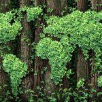 Plastica e ambiente: misure per la sostenibilità
